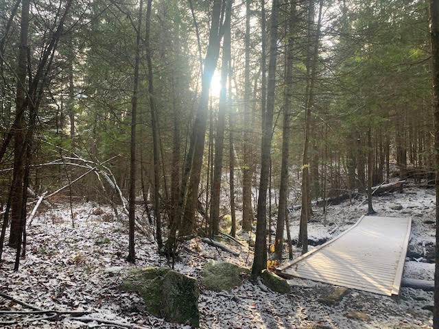 Bancroft Woods
